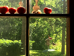 sun-kissed (glantine) Tags: light red summer window couple cardinal pair tomatoes organic fentre cheznous biologique rouges