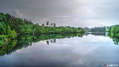 Green reflection (Ld\/) Tags: lake reflection nature water eau belgium belgique belgie ardennen ardennes lac eifel mai arbres reflexion wallonie 2016 ardenne rgion waimes robertville wallone weismes