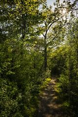 Down the Rabbit Hole (Zac_Townsend) Tags: nature sunshine path alice wonderland