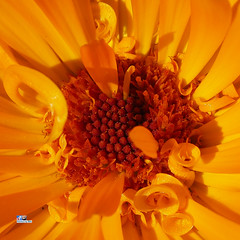 Flower Fun (FotoCheez) Tags: life seattle christmas camera city bridge flowers blue autumn winter light red summer test music dog house lake fish snow cold flower color macro building green bird art fall love ice beach beautiful grass leaves animal fog architecture clouds forest butterfly river garden landscape fun island happy fire coast boat washington leaf spring pretty working prism insects screen hike bugs bee honey refraction roll seahawks fx trump cannabis gsd fotocheez