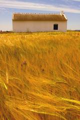 (Elvira S. Uzbal - elbeewa) Tags: summer flower rural landscape flor paisaje crop poppies verano spike construccin cereals cereales lamancha cultivo espigas amapolas