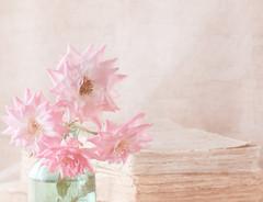 Flores y libros (saparmo) Tags: flowers roses stilllife flores books libros rosas oldbook bodeg seleccionar librosviejos