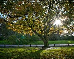 #176_IGP6684_5_6_Last_glimpse_of_sun (imageo) Tags: trees sunshine oak backlit hdr
