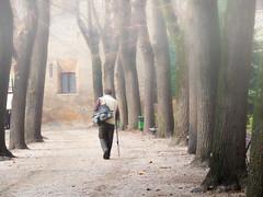 Non seguire (paolo bonfanti) Tags: alberi mantova maestro nebbia sentiero inverno autunno orme viale bastone