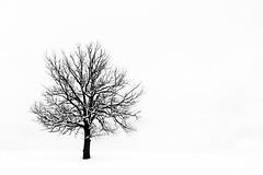 Contrasti invernali (Maver-71) Tags: ice landscape neve albero inverno appennino appenninotoscoemiliano pavullo appenninosettentrionalealpinatura ringexcellence