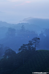 Misty Morning (2121studio) Tags: nature sunrise dawn nikon ali malaysia indah cameronhighlands kuantan alam malaysianphotographer drali sgpalasteaplantation 2121studio kuantanphotographer pahangphotographer ciptaanallahswt 0139342121 nubleebinshamsubahar