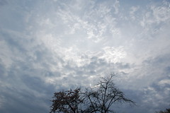 Our sad little tree (adamthelibrarian) Tags: beautiful illinois aurora walktowork sadtree hauntingly
