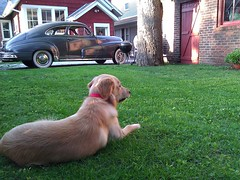 Wallce sitting on the grass (Hep2jive) Tags: green classic chevrolet car automobile deluxe twink future 1949 fleetline