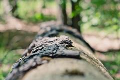 Lindale #5 (svllcn) Tags: desktop wood wallpaper tree forest landscape 50mm photo woods nikon bokeh bark