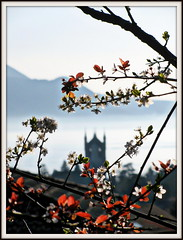 hint of spring (overthemoon) Tags: flowers blue red white lake mountains tower church leaves misty grey schweiz switzerland evening suisse branches stmartin frame svizzera gettyimages vevey vaud floweringplum romandie bestofr
