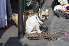 He did not like my camera (PauPePro) Tags: dog paris hund tgv 2012