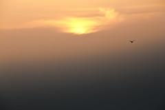 Atardecer Solitario. (ARFotografia.) Tags: luz sol atardecer paisaje gaviota