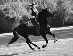 DSC_0656 (Maria Pastor Corrales) Tags: caballos