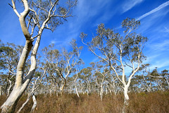 Bushwalk to Minnehaha Falls (anna-cathryn) Tags: trees sky sunny australia bluemountains bushwalk katoomba minnehahafalls