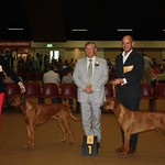 "Farouk Best male! ! <a style=""margin-left:10px; font-size:0.8em;"" href=""http://www.flickr.com/photos/68800547@N03/7310176228/"" target=""_blank"">@flickr</a>"