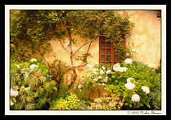 Garden (Nabin Thomas) Tags: california flowers windows usa buildings garden carmelmission historicplaces flickrsbest anawesomeshot diamondclassphotographer flickrdiamond goldstaraward malayalikkoottam