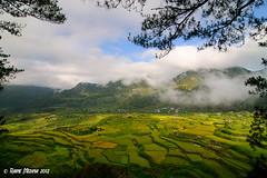 Sagada Rice Terraces at Sunrise (Raine Medina) Tags: sunrise philippines tokina1224 sagada mountainprovince d300