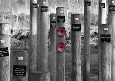The National Memorial Arboretum - respect (tim jg photography) Tags: blackandwhite memorial war sad shot post wrong silence poppy poppies conflict worldwarone remembered ww1 remembranceday emotional dayofremembrance posts neverforget sorrow humbling murdered 1111 1918 worldwar1 armisticeday inflandersfields tamworth unfair redpoppy lineofduty nationalmemorialarboretum poppyday 11thnovember 11thhourofthe11thdayofthe11thmonth sodiers colourpopped diedinthelineofduty shotatdawn remembrancepoppy 2poppies appropriatesymbol bloodspilledinwar fandersfields