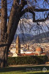 Giardini di Boboli, Firenze (filippi antonio) Tags: city italy panorama tree gardens landscape florence italia cityscape tuscany vista firenze toscana albero veduta paesaggio boboli giardini citt paesaggiourbano