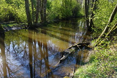 Reflections and shadows in Moran, Jrna (Madde Elg) Tags: reflection spring stream vr srmland jrna spegling moran