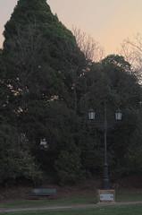 Little Park, Big Lamp (Occasionally Focused) Tags: pentax manualfocus pentaxm manuallens manualexposure unmetered rawtherapee justpentax