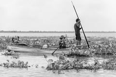 Fishing in the water hyacinths (tmeallen) Tags: woman man fishing couple cambodia culture kampong longtailboat tonlesap spear phluk monsoonseason waterhyacinths floodedlake