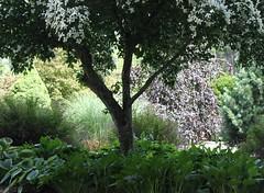 "I Call This a ""Meditation Garden"" (Kooklamou - MA., USA) Tags: beautiful gardens stanleypark meditation saveearth westfieldmausa"