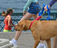 Out And About (swong95765) Tags: park people dog water river women exercise legs walk canine run shorts
