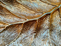 Aureos Quercus (Thad Zajdowicz) Tags: color gold leaf bowl pattern abstract dish indoor inside texture smooth glossy metal zajdowicz cellphone photoshopexpress mobile android motorola droid turbo smartphone cameraphone availablelight 366 365 oak aureosquercus monochrome
