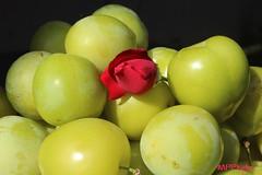 rosa e susine (marco prete) Tags: summer flower verde green nature rose yellow fruit estate plum rosa natura vert amarillo giallo fiore frutta susina