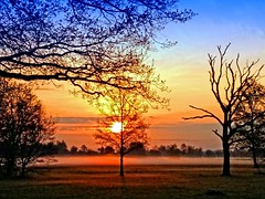 If I can dream.... (Tobi_2008) Tags: trees sky nature sunrise germany landscape deutschland saxony natur himmel ciel arbres sachsen landschaft bume sonnenaufgang allemagne germania