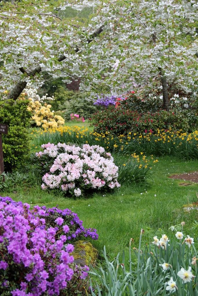 The World\'s Best Photos of meerkerkgardens and rhododendron - Flickr ...