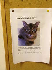 Lost cat - Singapore (louise_a) Tags: singapore seasia april commonwealth lostcat wessexvillage