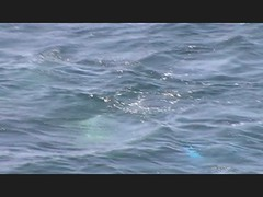 11_07_27 ¡Que peces son estos! (carlosviajero89) Tags: españa mar andalucía spain peces pesca almeria marino laisleta cabodegatanijar carlosviajero89 carlospla carlosviajero carlosviajeropla