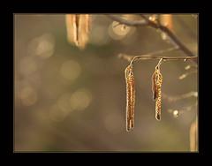 (inga_art) Tags: light sunshine lights spring bokeh olympus e510 ingaart