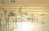(alessandro.sartori) Tags: lake backlight lago garda controluce gardasee