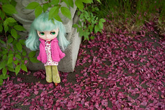 Pink Petals Everywhere