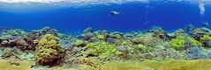 santo coralreef vanuatu