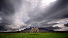 One Tree vs The World (jasohill) Tags: world storm tree nature rain japan clouds cherry japanese bravo iwate backgrounds   2012 mtiwate  nishine   hirakasa  f64g44r1win