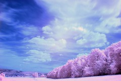 Pinkish Forest (alonzo.petrovich) Tags: sky clouds forest landscape ir x4 canon550d rebelt2i kissx4