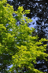 Fujita Memorial Garden 1 (makoto_315) Tags: japan aomori hirosaki