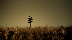 Angry Birds (D.LOS) Tags: field birds sign dark death scary nikon romania angry horror 1855mm crows scare cluj cheile turda synister turzii d40x