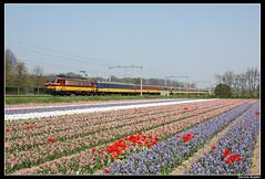 NMBS1188+benelux_Had_24042005 (Dennis Koster) Tags: ns portfolio hyacinten bloemen bollen trein nsr benelux bollenveld nmbs 1188 nshispeed personentrein passagierstrein spoorwegjournaal145