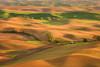 The Ripple Effect (Aaron Reed Photography) Tags: light green photography spring waves photographyclass photographers velvet hills workshop stockphotos stockimages palouse professionalphotography blackwhitephotography easternwashington palousehills photographyschool fineartphotographs skyphotographs lakephotographs aaronreed naturephotographs abstractphotographs landscapephotographs photographytraining framedartprints sunsetphotographs artphotographs sunrisephotographs aaronreedphotography surrealphotographs redphotographs waterphotographs cityscapephotographs cloudsphotographs duskphotographs reflectionphotographs exposurenorthwest bluephotographs aaronreedphotographer landscapephotographygallery mountainsphotographs orangephotographs pavementphotographs whatislandscapephotography whatisstockphotography aaronreedart aaronreedprints aaronreednature aaronreedaluminumartprints yellowphotographs bridgephotographs buildingsphotographs twilightphotographs roadphotographs aaronreedmetalprints aaronreedacrylicfacemountprints