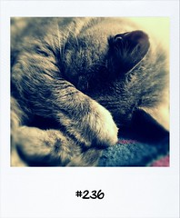 """#DailyPolaroid of 21-5-12 #236 • <a style=""""font-size:0.8em;"""" href=""""http://www.flickr.com/photos/47939785@N05/7258151316/"""" target=""""_blank"""">View on Flickr</a>"""