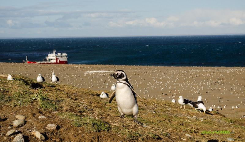 Patagonia Pingüinos