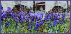 Urban Irises (Tim Noonan) Tags: digital photoshop diptych irises urban composition flowers fence buildings green violet texture trolled tistheseason digi hypothetical awardtree legacy sincity art manipulation shockofthenew sotn vividimagination digitalartscene digitalartscenepro tim maxfudgeexcellence maxfudge exoticimage netartii maxfudgeawardandexcellencegroup magiktroll sharingart stickybeak newreality shining