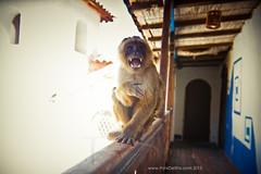 Monkey (Life By Muse) Tags: travel art peru southamerica inca cuzco tour gorgeous cusco culture lifestyle adventure collection photograph series eco sustainable backpackers femalephotographer thinkdesha breakordinary dsha deacutesha lgorge portraitbydesha cyndare lifebymuse