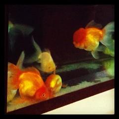 ลูกปลา