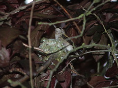 DSCF4420 (mr_grant) Tags: seattle bird hummingbird nest wildlife
